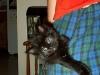 bubblesthe_cat